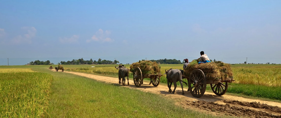 agriculture of bangladesh Agriculture in bangladesh: agriculture is one of the most important economic sectors in our bangladesh 80% people are related in the agriculture sectorfrom this agriculture sector bangladesh earned many foreign currency.